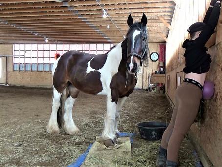 Abdos et équitation