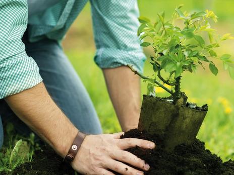 Jede Rezension ist ein neuer Baum auf der Welt