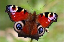 Butterflies!!