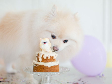 New Product Line - Bakes for Fur babies!