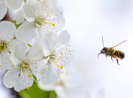 Five easy ways to make your garden bee-friendly!