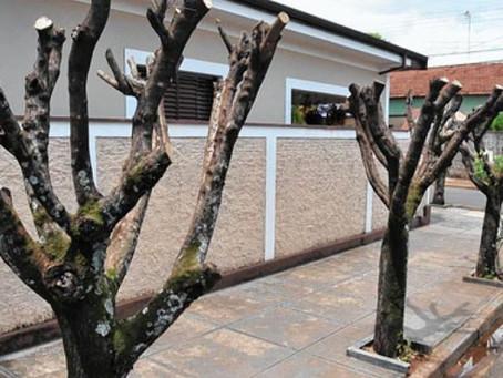 Será que a CPFL também recebe multa por podas drásticas de árvores?