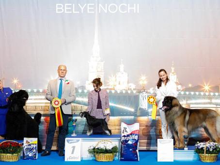 "INTERNATIONAL DOG SHOWS ""BELYE NOCHI 1-2"""
