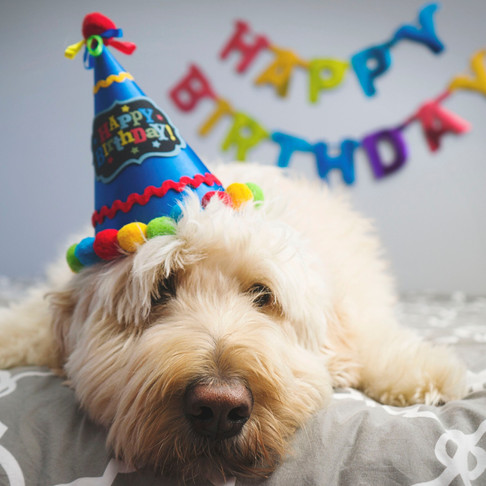 Happy DOGust - A Day For Celebrating Shelter Dogs