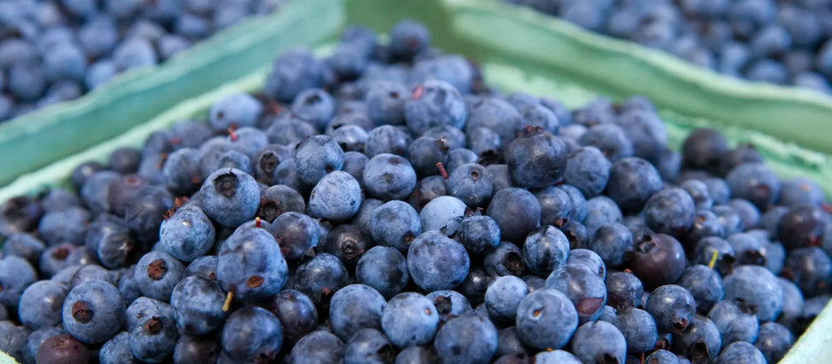 Blueberries: Are They Worth The Health Hype?