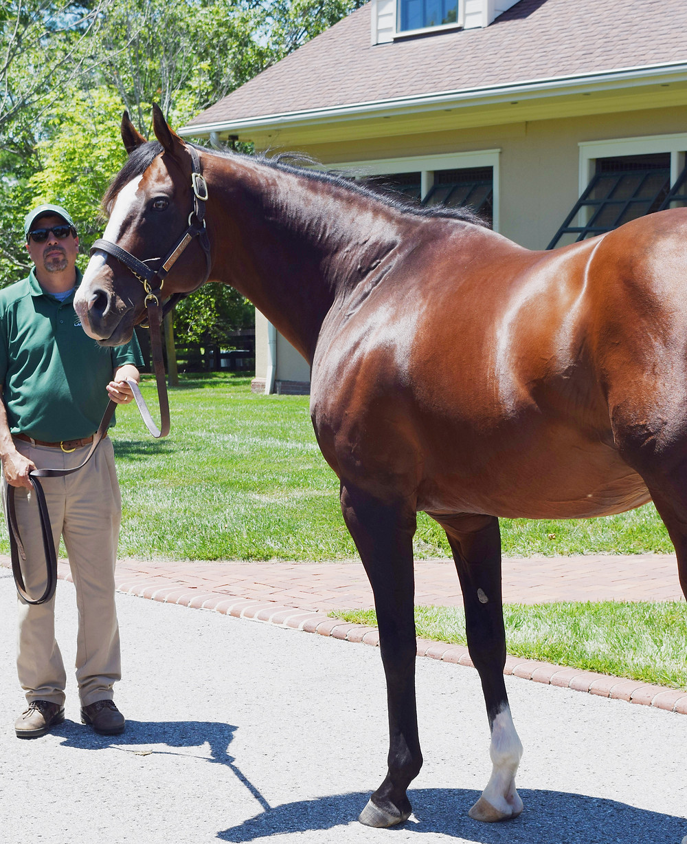 Union Rags, 2012 Belmont Stakes winner, at Lane's End Farm. Visit Horse Country Tour