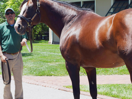 Union Rags: The Horse Who Made Me Love Racing
