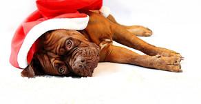 Der Hundeblog wünscht frohe Weihnachten