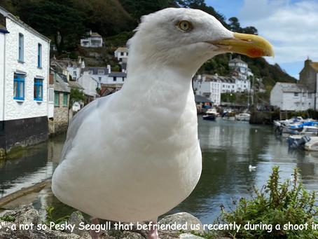 "The birth of  a ""pesky"" seagull"