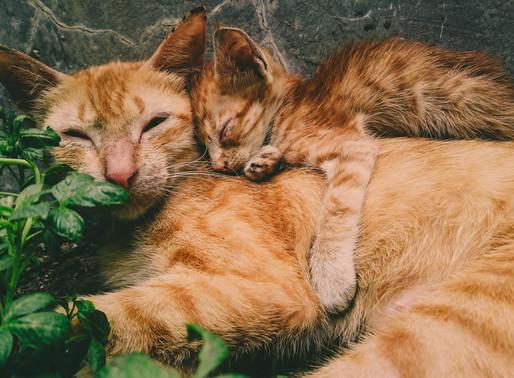 Enriquecimento ambiental em gatos