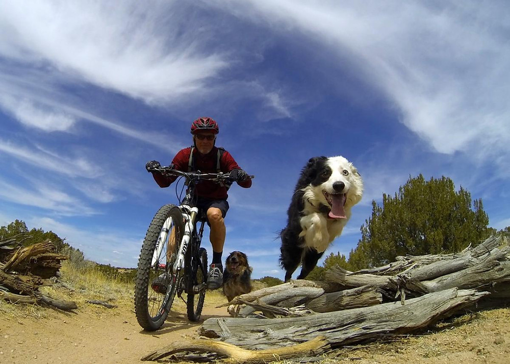 Proper Ways to Bike with Your Dog - Petdiary Dog Training Collars