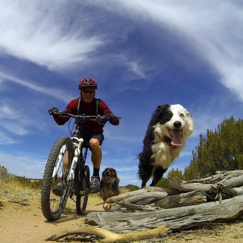 Proper Ways to Bike with Your Dog