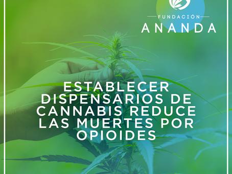 Estudio encuentra que establecer dispensarios de cannabis reduce las muertes por opioides en un 21%