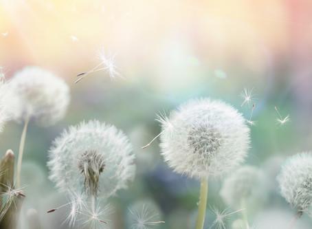 Natürliche Hilfsmittel gegen Pollen.