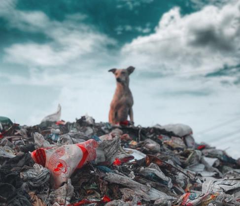 The Single Use Plastic Dilemma