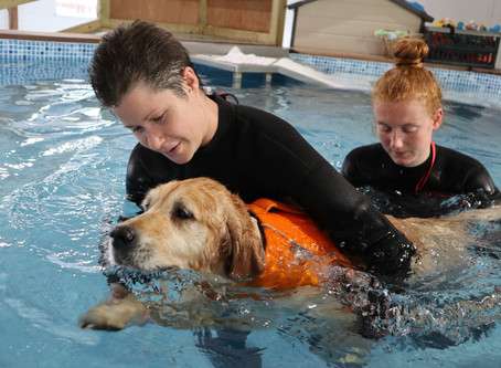 Hydrotherapy Podcast - How it can help your dog
