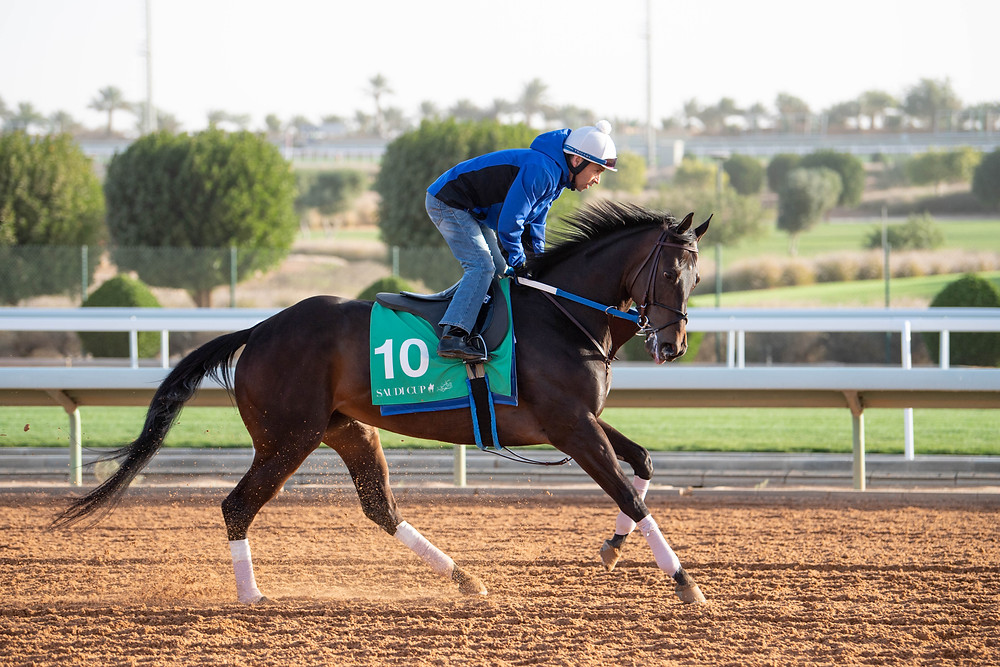 Midnight Bisou prepares to take on the boys in the inaugural Saudi Cup.