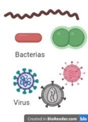 Virus y bacterias,¿qué los diferencia?