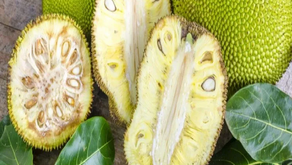 Jackfruit in Cancer Treatment - Study Unveils Positive Results