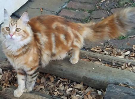 PET CAT PARADE
