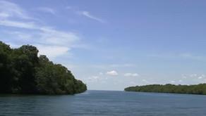 Les marais sur l'eau (mangroves en français/manglares en espagnol ) de Varadero