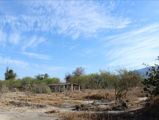 Producción de Caléndula en la Mixteca Poblana