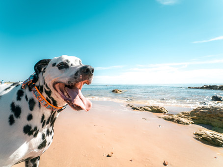 Escape, Relax and Unwind with your furry friend on the beaches of St Ives.