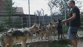 """Unser Trailer Nr. 2: Miguel de la Torre über Wölfe und die """"Lex Wolf"""""""
