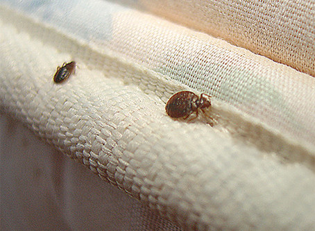 We Specialize In Ridding Bed Bugs
