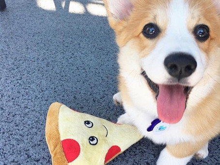 Like coffee, pups and pizza? This Yaletown outdoor activity is combining them all this weekend