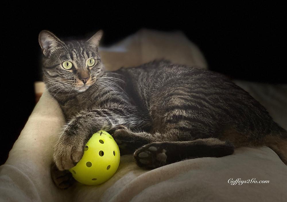 bright eyed cat with pickleball pet sitting  Coffeys2Go