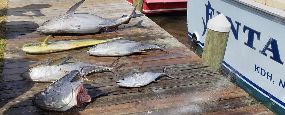 tuna fishing North Carolina Outer Banks