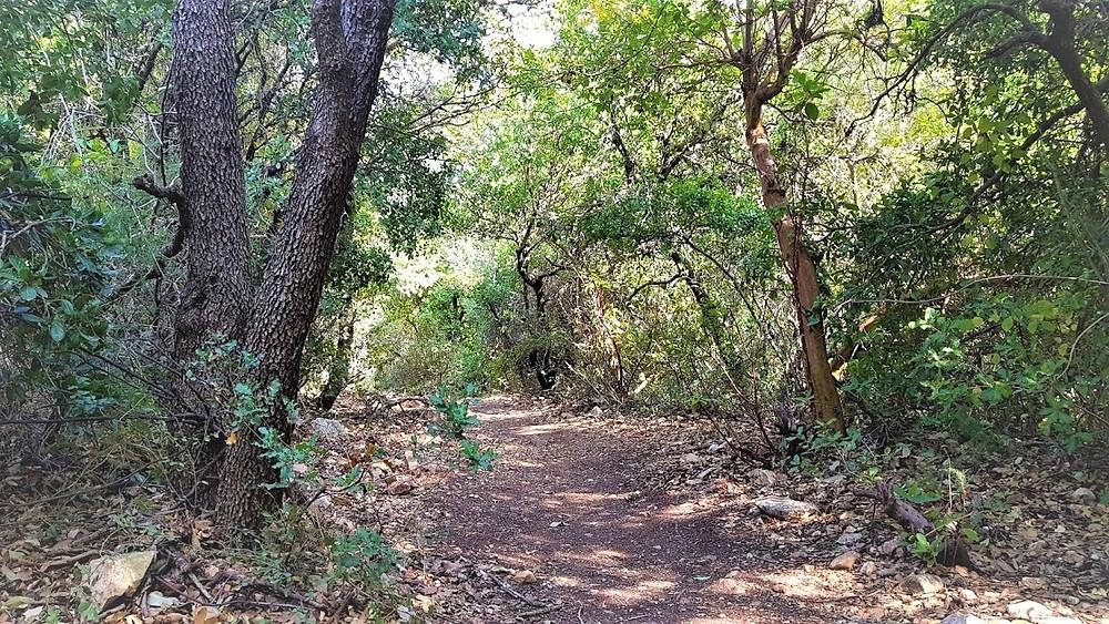 נחל נריה ליד הר מירון, מסלול מוצל וקל