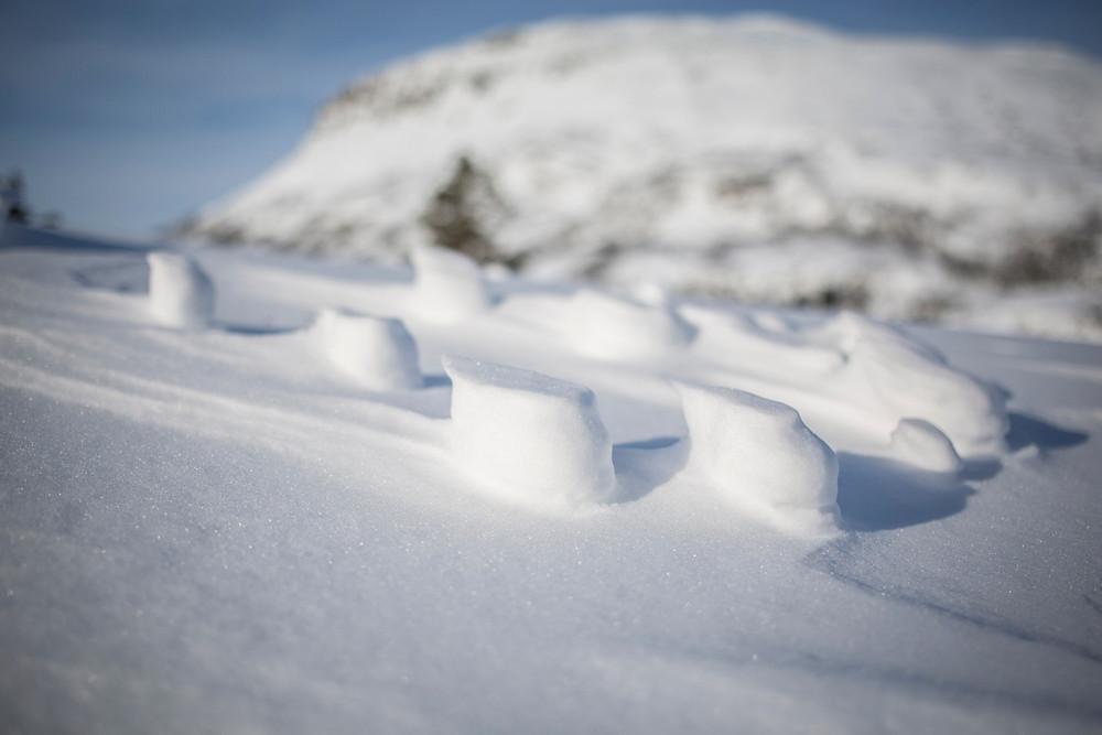 Haresporene har blitt til harde spor som står igjen oppå snøen der haren har gått og vinden har plystret forbi.