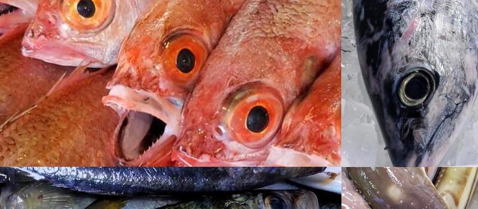 豊洲市場×AlberoNero 〜白金通りでお魚祭り〜【秋の陣】