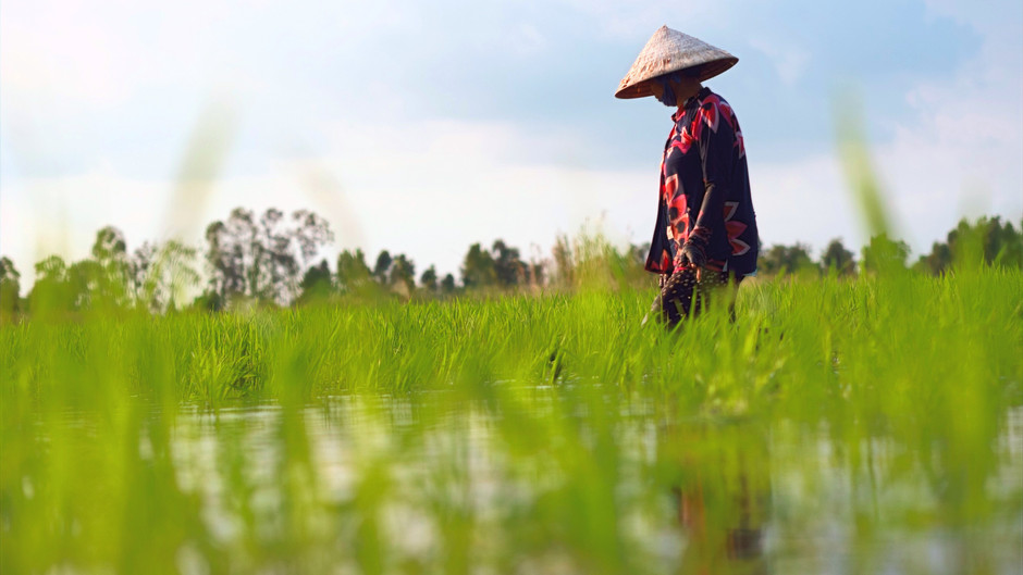 Saving the Mekong Delta
