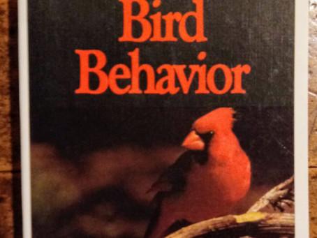 Colloquialism & 2 Birds