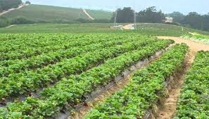 Nigeria: Technology in Farming business