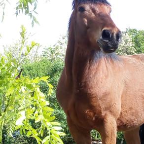 Quand j'étais cheval