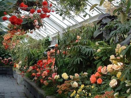 Exotic plants stolen from Wellington Botanic Garden