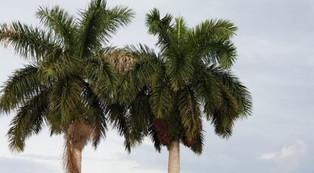 Des nouvelles de Cuba - Par René Lopez Zayas - Une nouvelle ère se profile à l'horizon (oct. 2020)