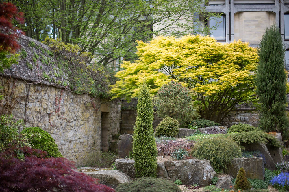 Oxford, Portland, classical architecture, yellow tree, garden, beautiful yard, landscape, old buildings