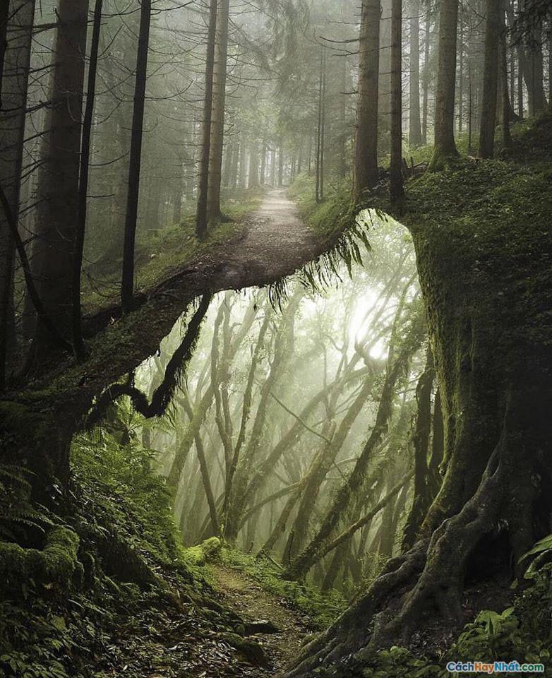 Chụp ảnh đường mòn trong rừng của justin peters