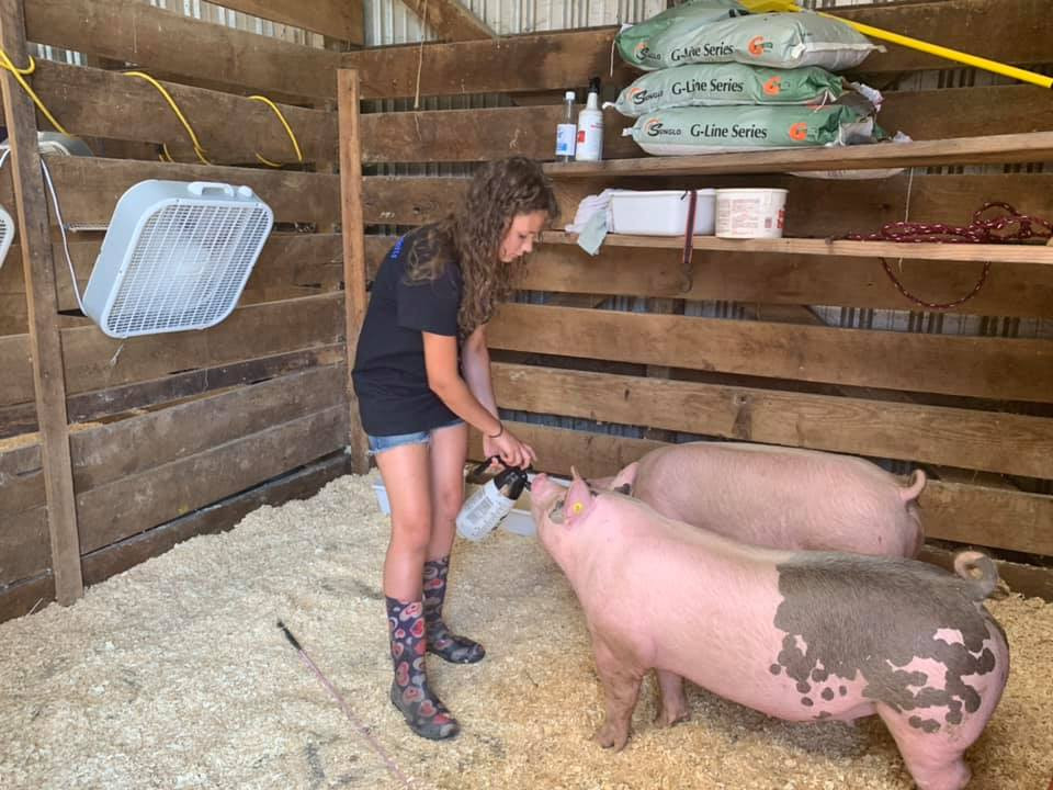 Girl taking care of her pigs at the harford county 4-h farm fair