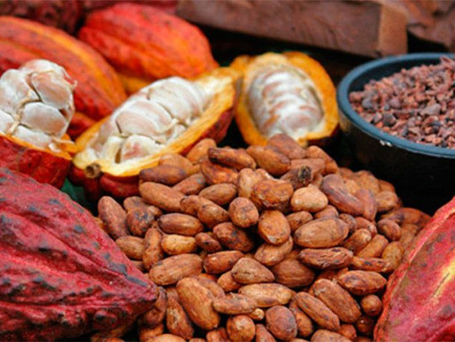 Raw Cocoa Powder Can Boost Your Immune System Against COVID-19