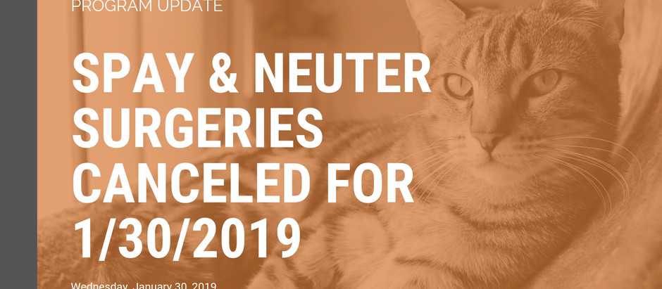 Spay and neuter surgeries scheduled for Wednesday 1/30/19 to be rescheduled