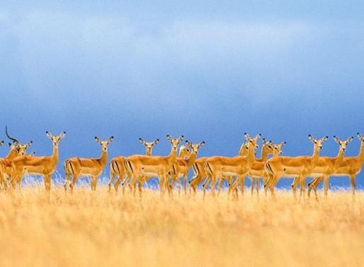 Wild, Wonderful Safari