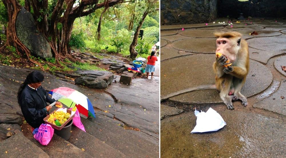 Singe grottes de Dambulla au Sri Lanka