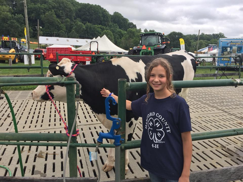 Girl and her cow at the harford county 4-h farm fair