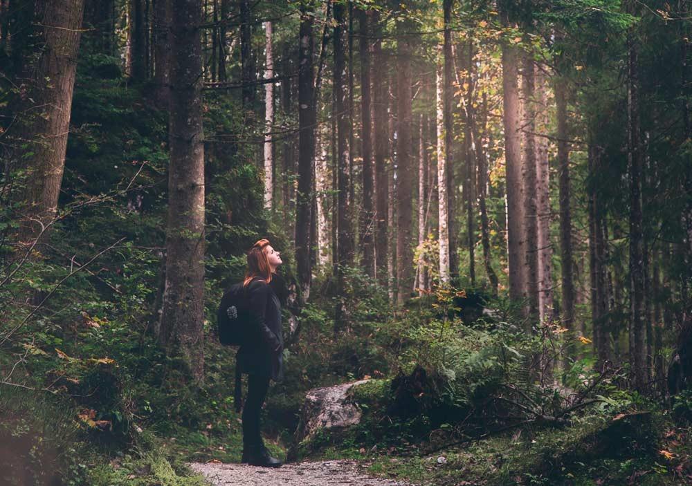 #digitaltskogsbad #skogsbad #örebro #guidetillskogsbad